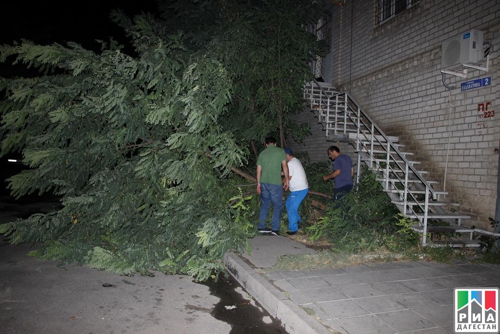 Cотрудники экстренных служб ликвидируют последствия сильного ветра вМахачкале, где зафиксированы перебои сэнергоснабжением