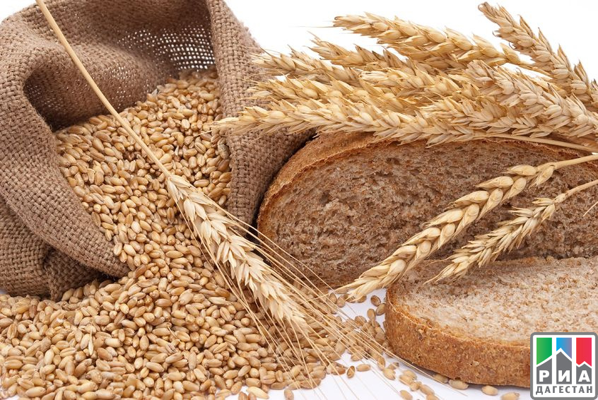 Свыше 210 тыс. тонн хлеба произвели вследующем году вДагестане