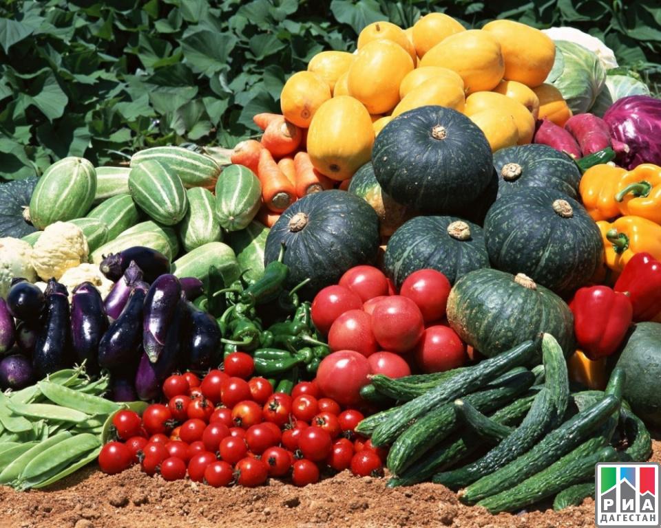 Сельхозпроизводство вДагестане планируют увеличить на6%