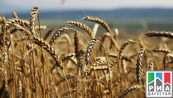Минсельхоз повысил оценку экспорта пшеницы в 2015-2016 году
