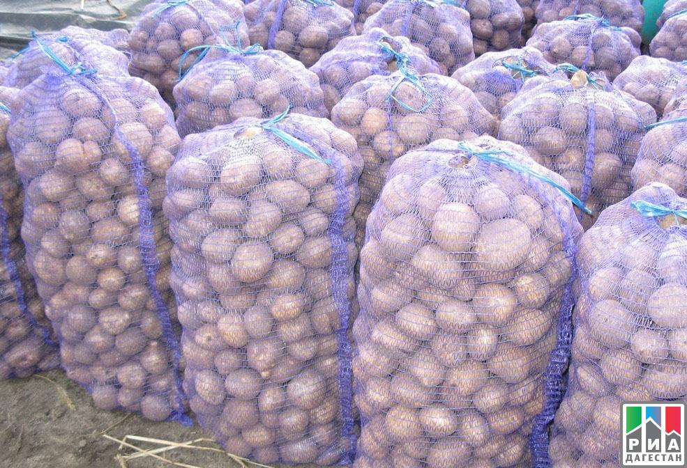 Вхозяйствах Дагестана подходит кконцу уборка овощей, картофеля иплодов