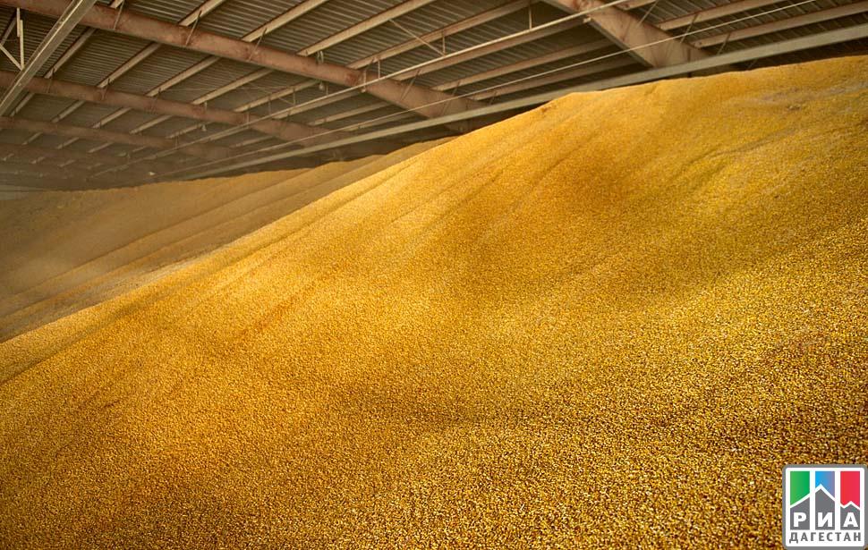 Аграрии Дагестана завершили уборку кукурузы