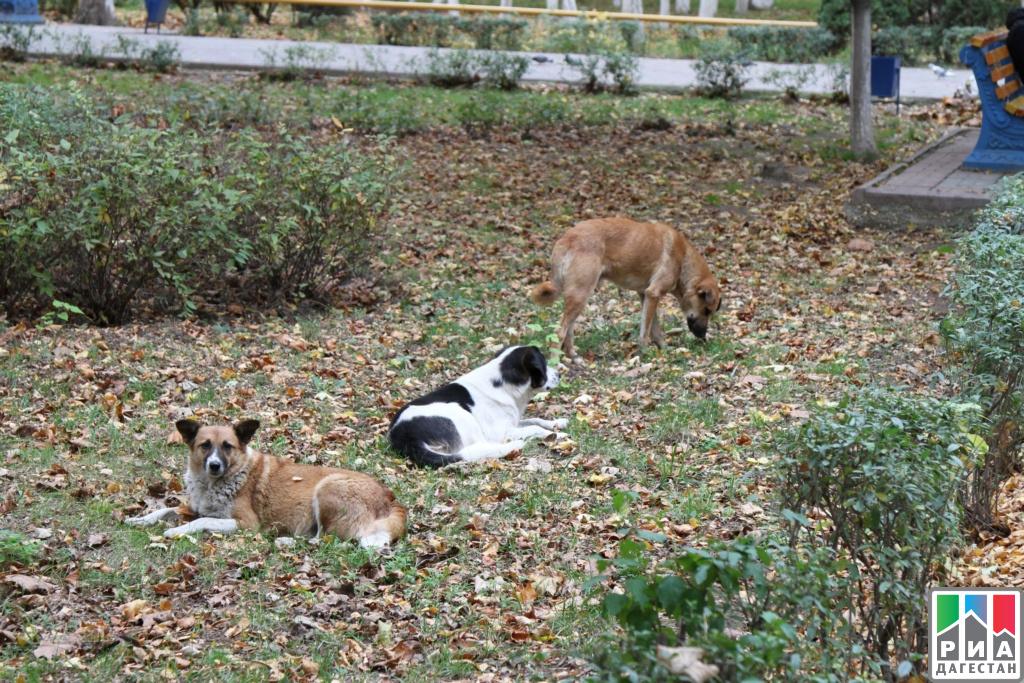 ВМахачкале стерилизовали неменее 770 бродячих собак
