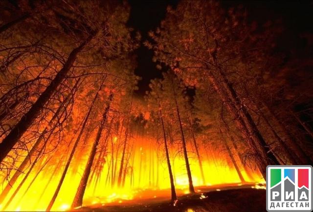 Пострадавшие отприродных пожаров получат 143 млн  руб.