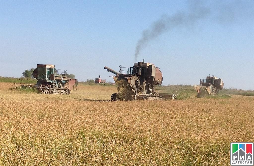Площадь сельхозугодий под рис вДагестане возрастет