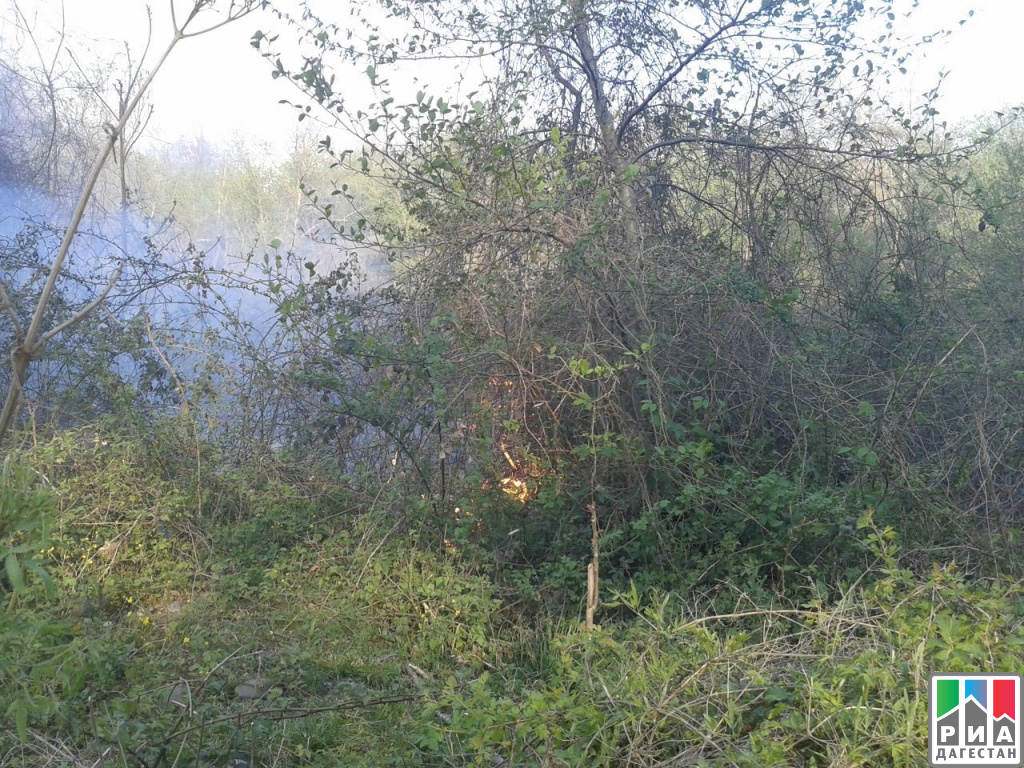 Пожар вСамурском лесу Дагестана ликвидирован