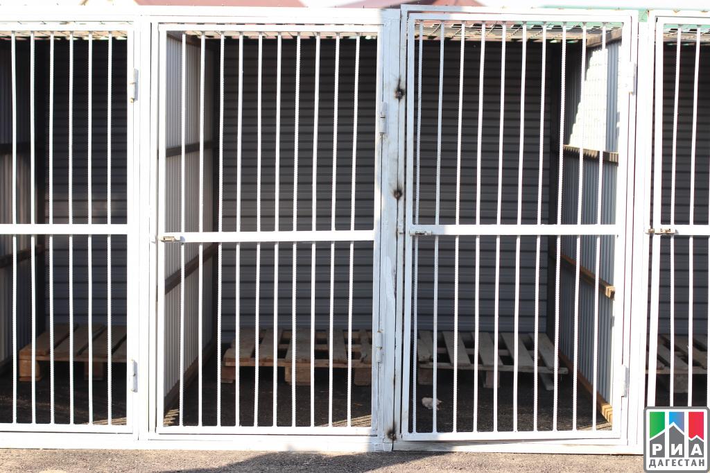 ВМахачкале открыли долгожданный питомник для бездомных животных без карантина