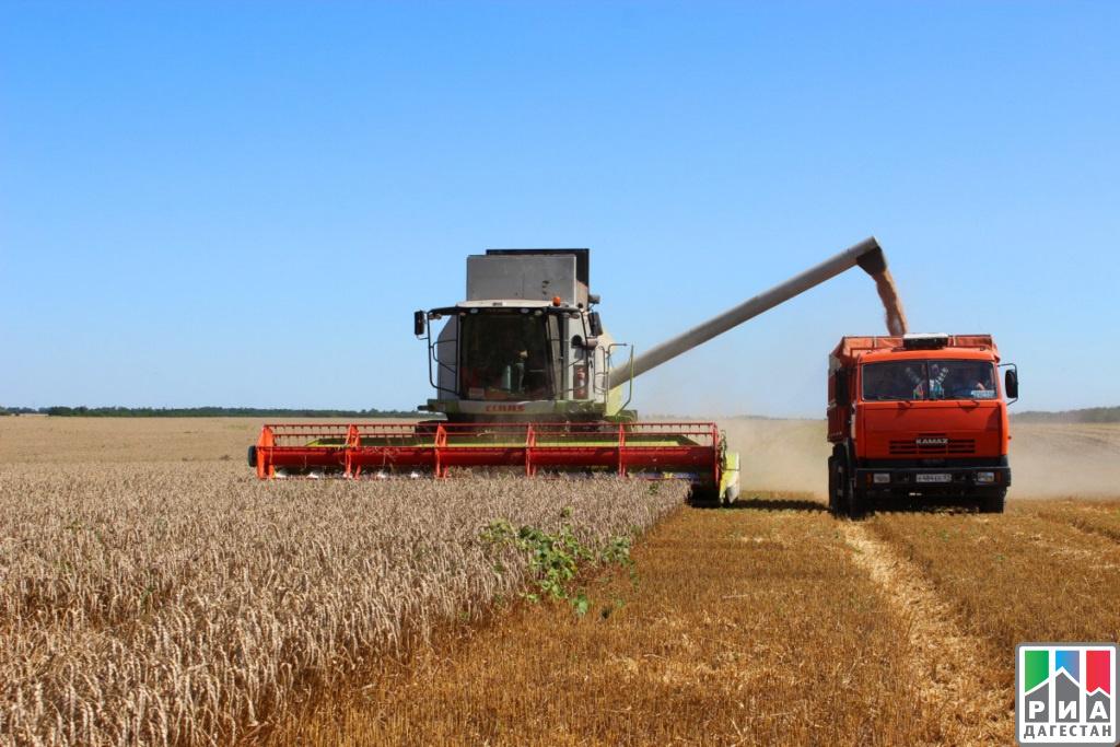 ВКраснодарском крае аграрии обмолотили неменее 40% озимого ячменя