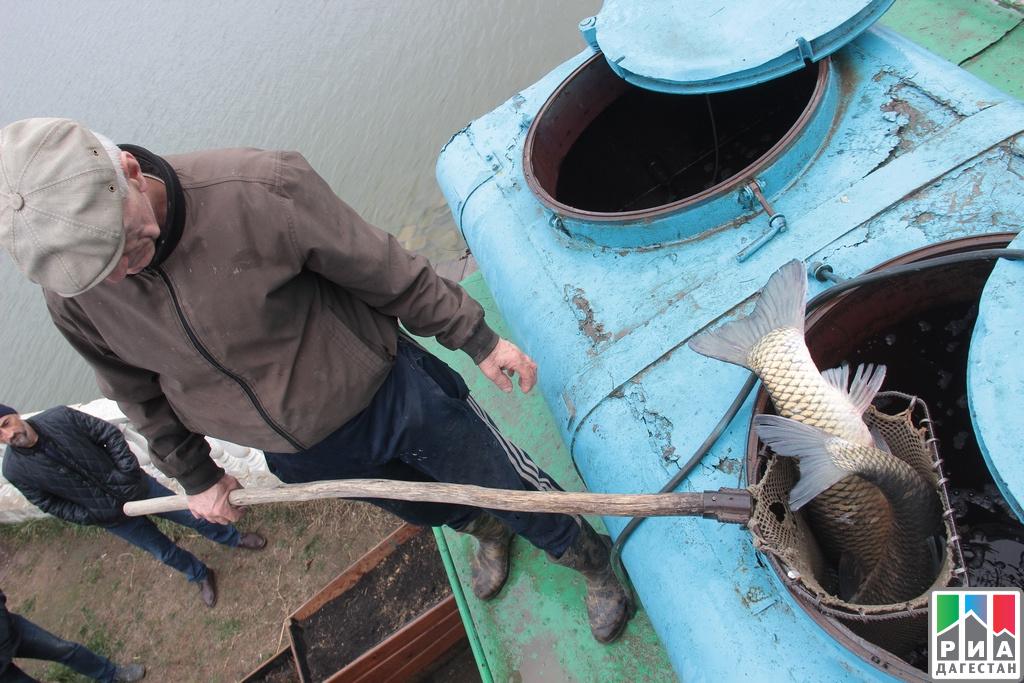 Предновогодняя рыбная ярмарка пройдет Махачкале