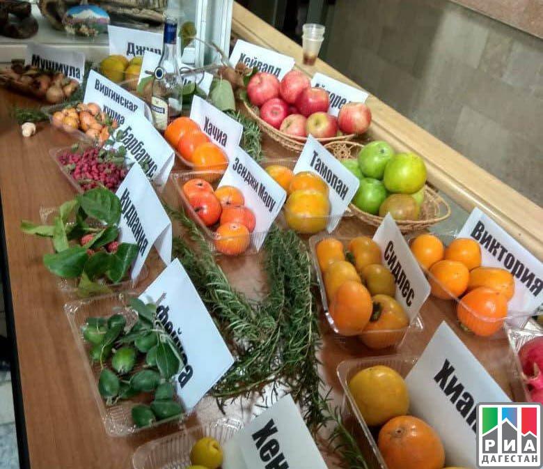 Неменее 50 товаропроизводителей примут участие ввыставке «Дагпродэкспо-2017» вМахачкале